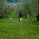 asparagi-e-cicoria-il-falco-del-cilento-in-evidenza